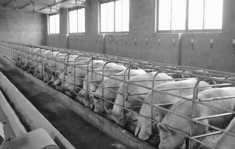 Підлоги та стіни ферм мають особливо важливе значення. Від їх якості залежить здоров'я і продуктивність тварин, чистота молока.